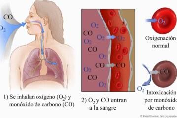 Dióxido de carbono transporte en el cuerpo humano